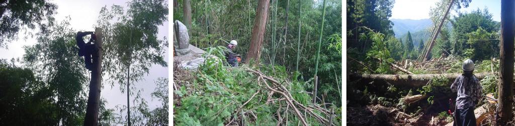 承久寺 危険木伐採